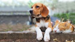 Here Are Britain's Most Popular Pet Names – And They're All Kinds Of