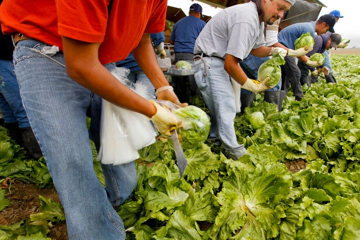 Workers harvest iceberg lettuce at a California farm for the Nunes Company, which handles more than 20,000 crop acres of various fresh vegetables annually.