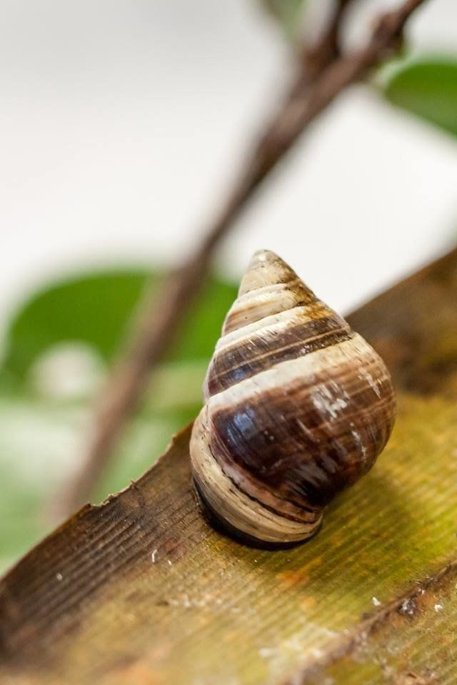Lonely George, the last known tree snail of its species, has died in Hawaii, wildlife officials announced.