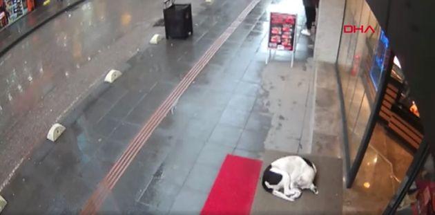 거리에서 추위에 떠는 개를 본 사람의 행동이 CCTV에