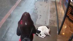 추위에 떠는 개를 본 사람의 행동이 CCTV에