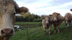 Fedeu: gases e arrotos de vacas provocam explosão na