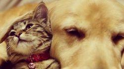 Cães e gatos são inimigos? Eles provam o contrário