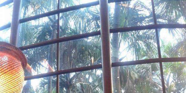 Manaus e a floresta no