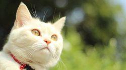 13 gatos que estão aproveitando o verão melhor do que você