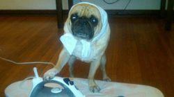 Winston, um cachorro que pensa que é gente