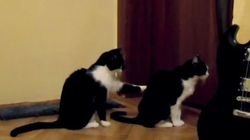 ASSISTA: Gato tenta se desculpar com outro
