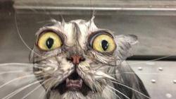 O horror: gatos que acabaram de sair do banho