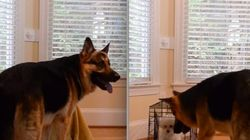 Malandrão! Cachorro espera dona sair para soltar amiga de