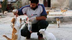 FOTOS: No meio da guerra civil da Síria, uma cena de amor com 150 gatos