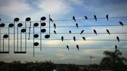 ASSISTA: Ele pegou uma fotografia de pássaros e transformou em