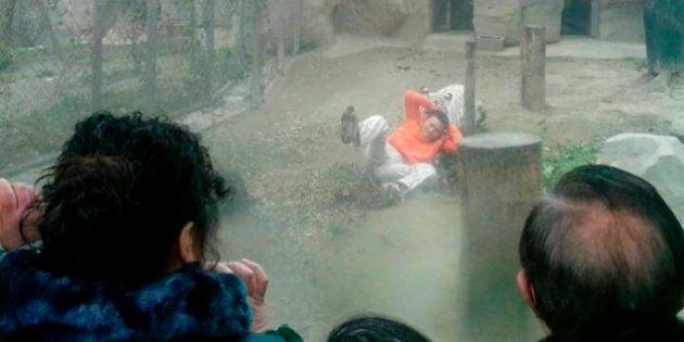Tigres desprezam suicida que se oferece como sacrifício na
