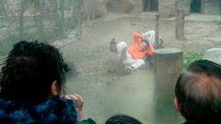 Ele se ofereceu como sacrifício, mas os tigres não estavam tão
