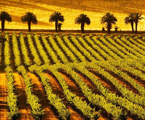 7 destinos para você participar da colheita ainda nesta