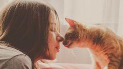 5 mitos das donas de gatos que são muito