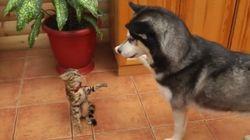Este cachorro queria apenas um amigo. Mas o gato não entendeu