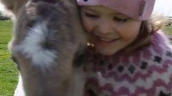 A amizade desta menina e um cavalinho vai te