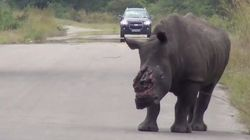 ASSISTA: Com chifre arrancado por caçadores, rinoceronte tenta