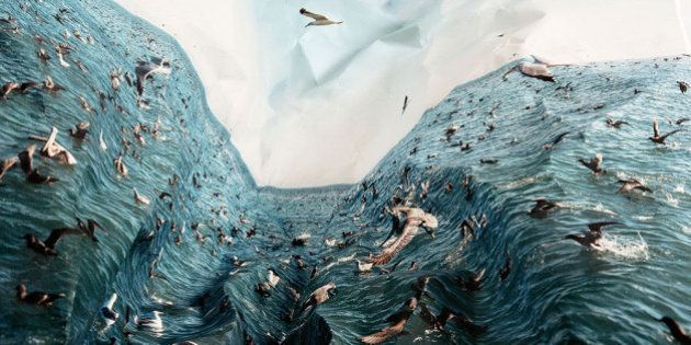 Laura Plageman: artista brinca com imagens distorcidas