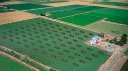 O BOOM da energia solar nos Estados