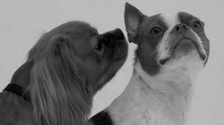 ASSISTA: Cachorros se