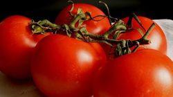 O tomate é de novo o