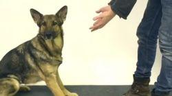 ASSISTA: veja a reação de cachorros quando uma mágica