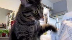 ASSISTA: Esta gata sofre com vício mais terrível e fofo do