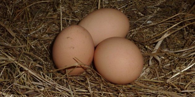 Three eggs laid