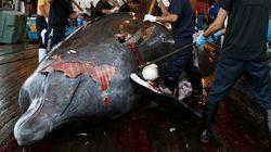 Será o fim da caça às baleias na