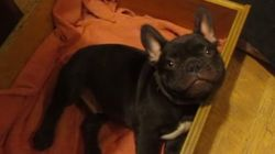 ASSISTA: cachorro tenta argumentar com a dona para dormir mais
