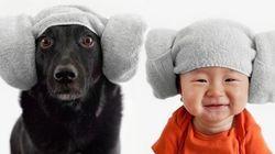 VEJA: o que acontece quando um cachorro e um bebê se vestem