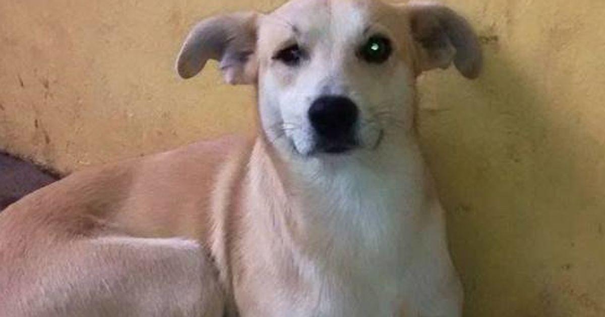 ASSISTA: este cachorro é a melhor tradução da palavra saudade