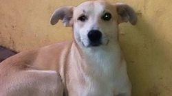 ASSISTA: este cachorro é a melhor tradução da palavra