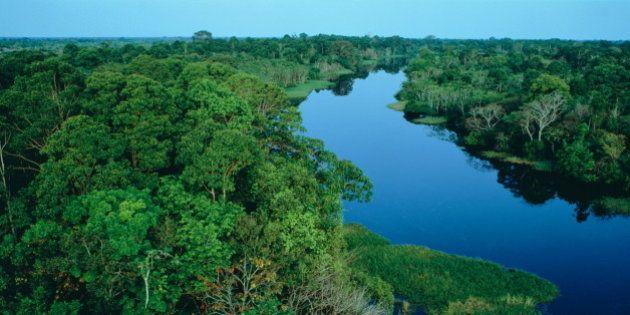 O imbróglio do Código Florestal prejudica o