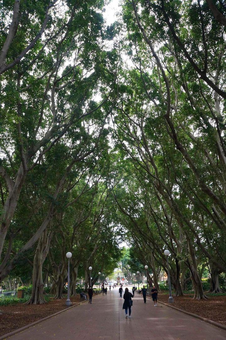 시드니 하이드 공원.