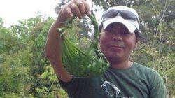 FOTOS: As lições amazônicas de Leandro, filho do chefe
