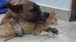 A prova de que tudo que os cachorros mais querem é ser amigos dos