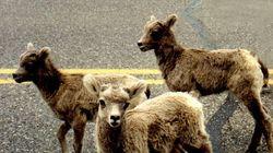 Ajude a preservar animais nas estradas por meio de