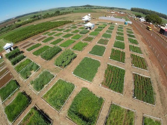 Os drones já chegaram na agricultura