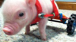 9 animais que tiveram uma segunda chance de vida graças à