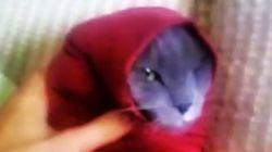 Salve-se quem puder! Assista gatos presos em mangas de