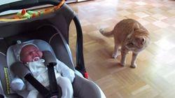 ASSISTA: o que acontece quando um gato vê um bebê pela primeira