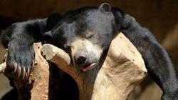 18 animais que estão MOR-REN-DO de