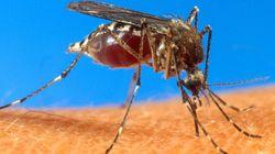 Dengue pode