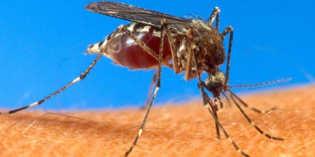 Epidemia da dengue: política de