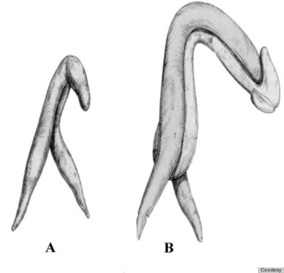 O ponto G e o 'orgasmo vaginal' são mitos, segundo novo