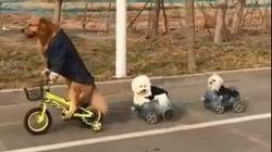 Ο σκύλος που οδηγεί ποδήλατο, μοτοσικλέτα και