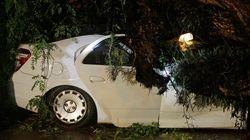 Chuva derruba árvore sobre táxi e esmaga o