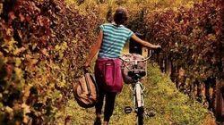 8 vinhos para beber no inverno (neste e nos